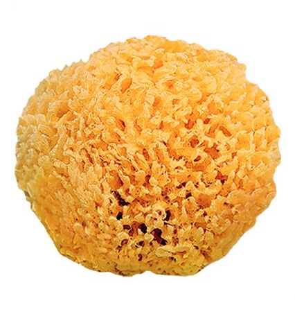 esponja-natural-1-426x600.jpg